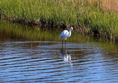 Travelogue – Birding in Virginia, Chincoteague Island, VA